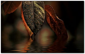 Su Yaprağı
