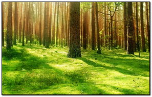 Beautiful Forest Scenery-wallpaper