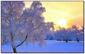 Winter Evening Light-wallpaper
