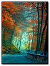 Nature Road In Autumn