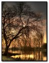 Sunset Lake Tree