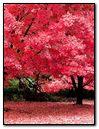 Árbol rosado