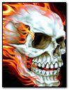 the king skull