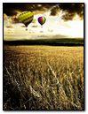 Corn Field Dream