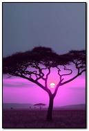 Pink Sun Wild Africa