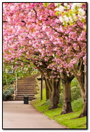 Park Path Pink Leaves