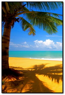 Sunny Summer Beach Day