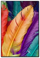 Colorful Wallpapers For IPhone 4 07