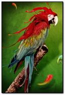 Cool Parrot