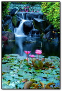 Waterfall & Lotus
