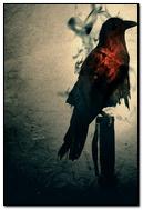 Dark Bird