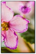 Allah Flower