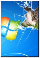 Windows Cat