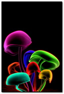Colourful 3D Mushrooms