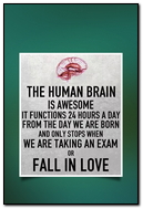 The Human Brain Is Awesome!