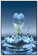 Daisey Water Splash