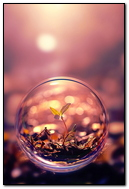 Plant In A Bubble