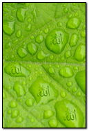 Allah In Waterdrop