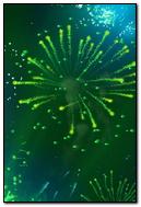 Green Fireworks iPhone 6 Wallpaper