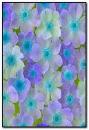 Purple & Blue Flowers 01