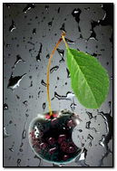 Black Cherry Logo