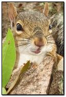 Squirrel Portrait.