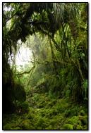 Naturel Wall (48)