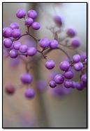 Little Berries