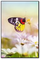 Aesthetic Butterfly On Flower
