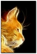 Light Rays Cat