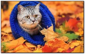 Cat In A Blue Scarf In Autumn Park
