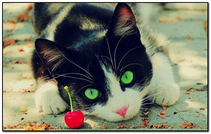Cat Green Eyes HD