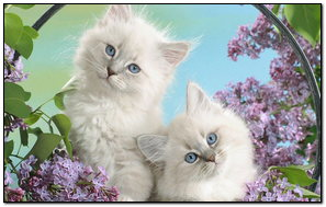 Cats In A Basket With Lilacs