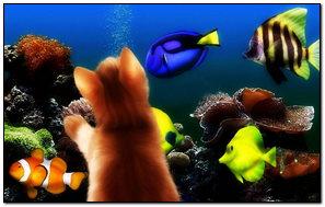 A Kitten Tại The Aquarium
