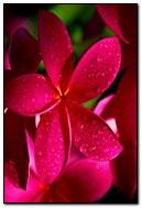 Hello Red Flower