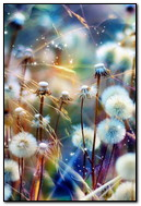 Sparkling Flowers