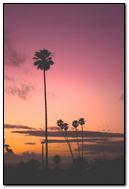 Coconut Tree Beach