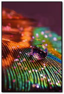 Feather Glitter Macro Multicolor