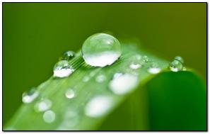 Leaf Dew Drops