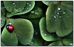 Ladybugh