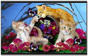 Summer Cats 193