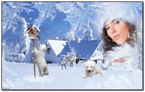 Beautiful Winter (230 Winters)