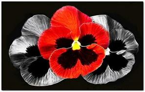 Flower.800.480