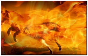 Firefoxy 136