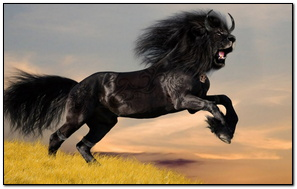 Black Horse Lion By Dragonfly