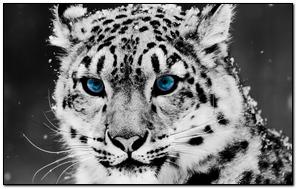 Cat Tiger Leopard