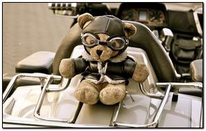 Pilot Teddy
