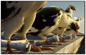 Spy Dove