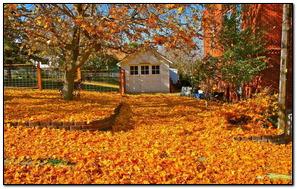 Heavy Autumn