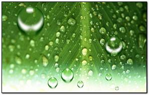 Leaf Water Drop